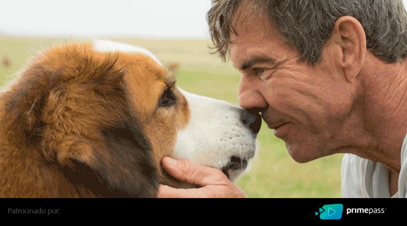 CRITICA | Quatro Vidas de um Cachorro